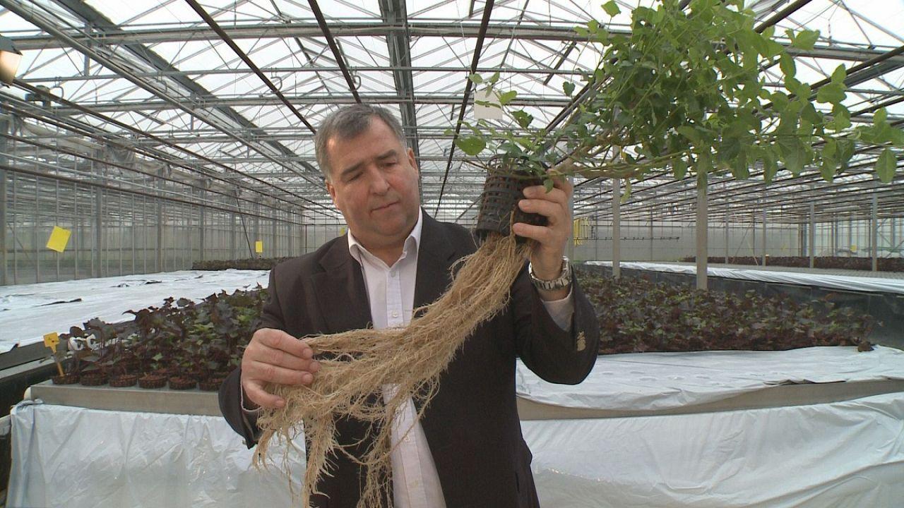 Plantas poco corrientes que producen moléculas muy valiosas