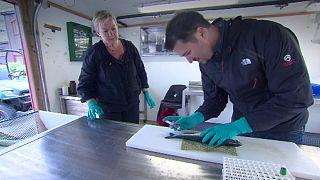 أعلاف جديدة مستدامة للأسماك المستزرعة