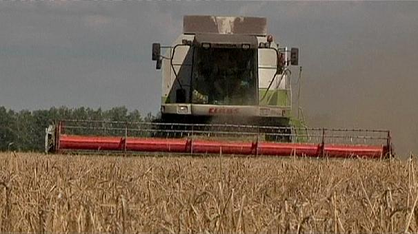 US biofuel policy a threat to global food supply