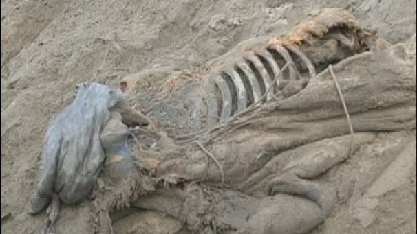 Mammoth skeleton found in Siberia
