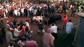 Presidential bullfight in Kenya – nocomment