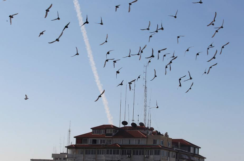 Birds and rockets in the Gaza sky
