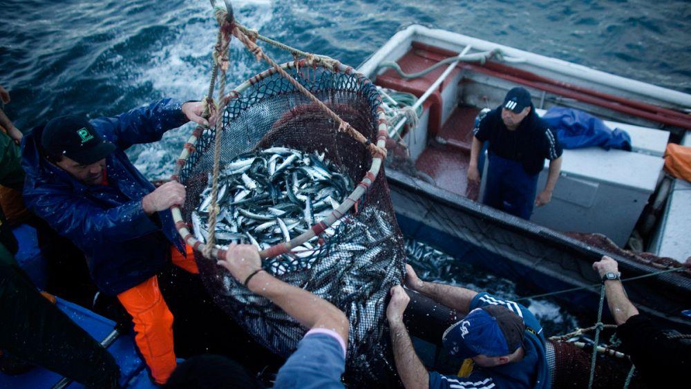 ловля рыбы во время мора