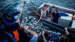 Estamos a pescar em demasia?