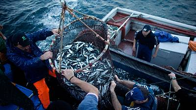 Subventioniert die EU die Überfischung der Weltmeere?