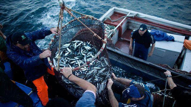 AB denizlerde aşırı avlanmanın önüne geçebilir mi?
