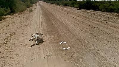 Google denies donkey hit-and-run