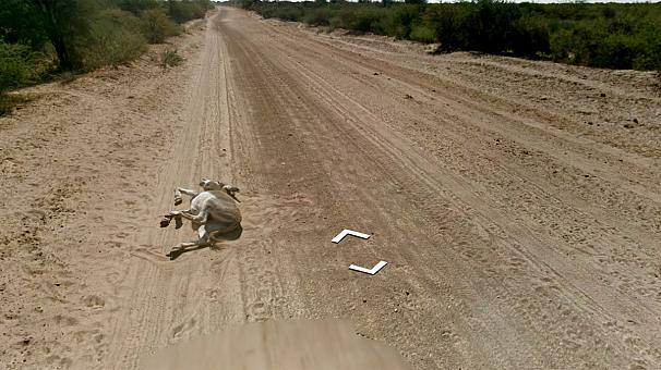 Google denies donkey hit-and-run