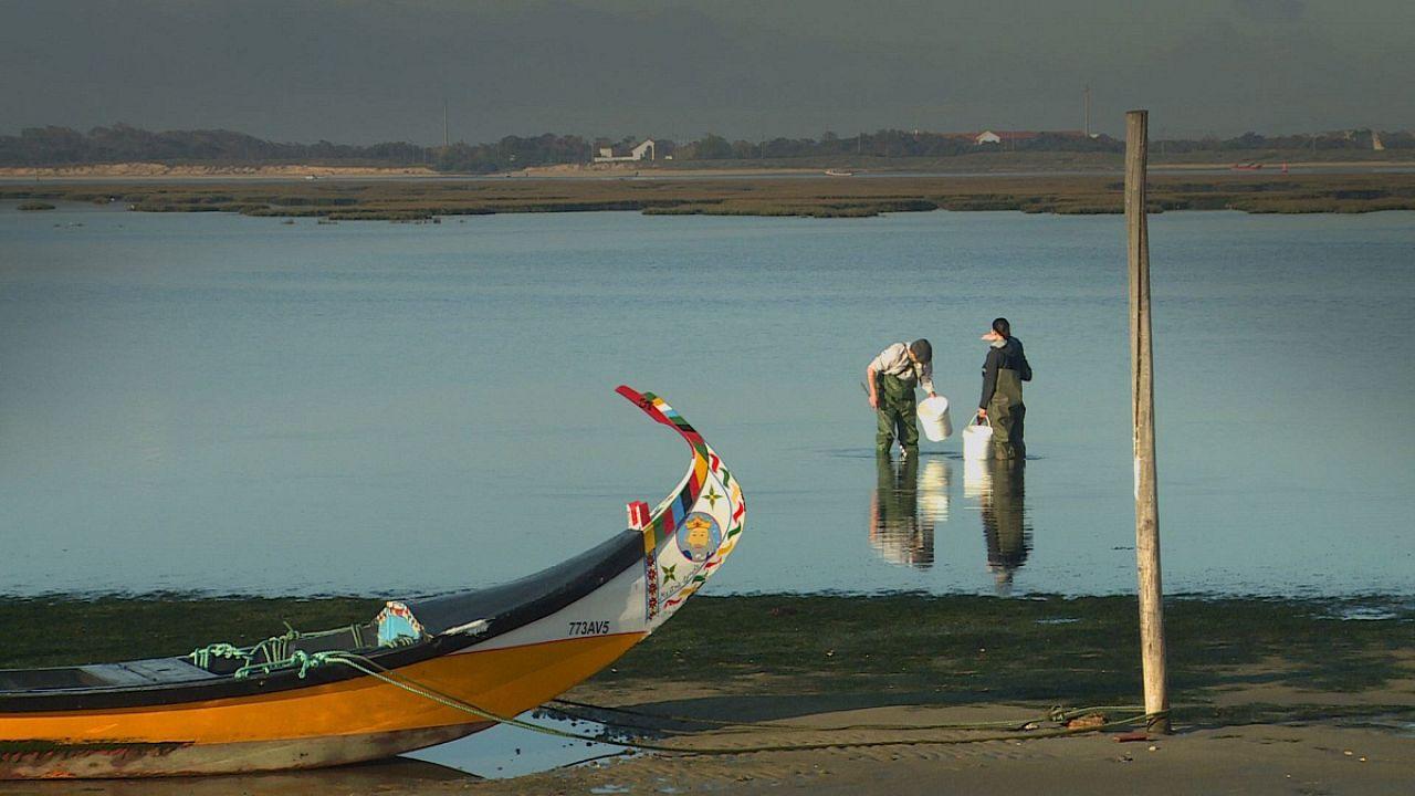 Λιμνοθάλασσα του Αβέιρο: «Πολύτιμο» οικοσύστημα σε κίνδυνο