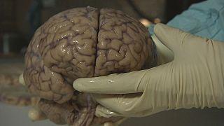 في عمق الدماغ