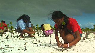 Кем быть на острове и что делать в засуху