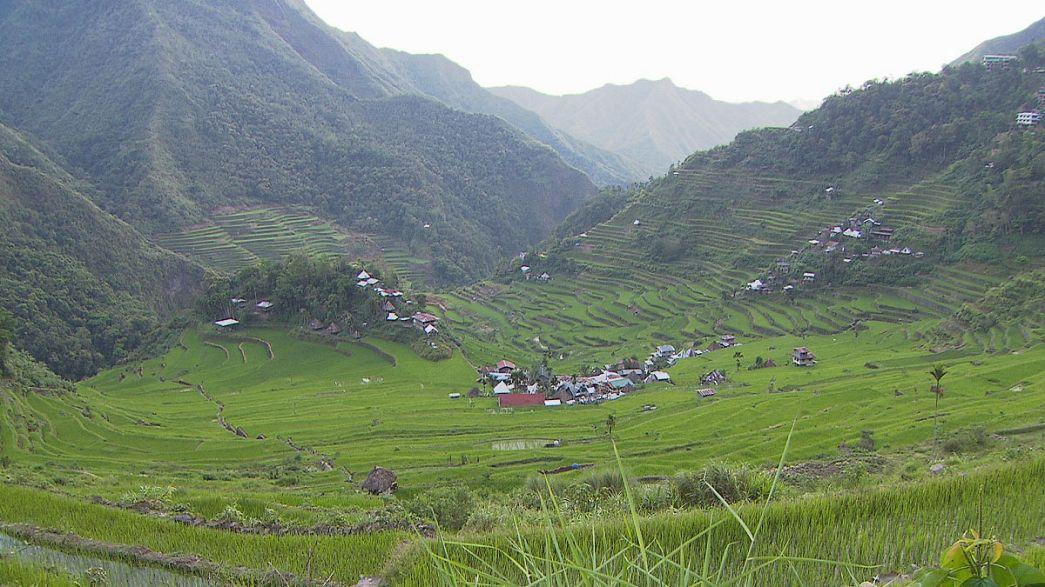 Filipinler'in 2000 yıllık çeltik tarlaları