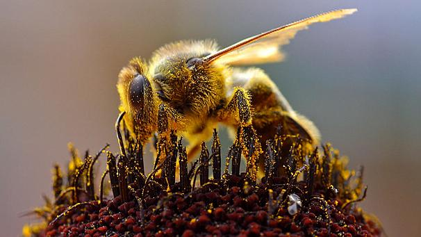 The bee-ginning of the end?