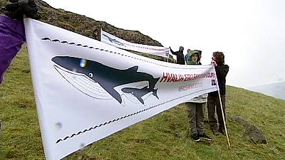 Animal welfare groups condemn Iceland as it resumes whaling