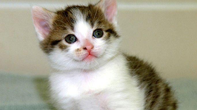 4,000 cats stolen by gang in Vietnam