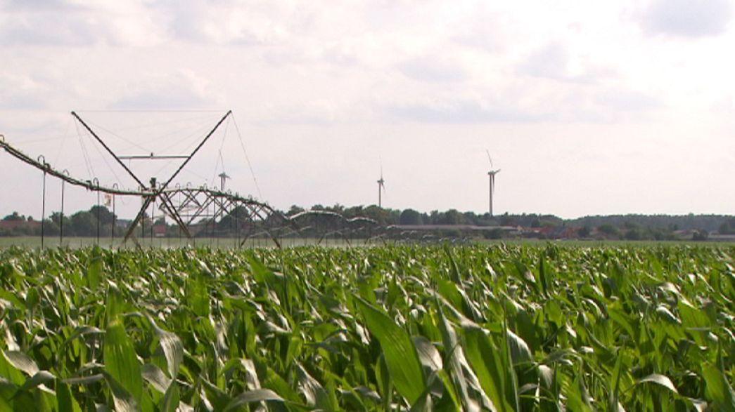 Inteligens öntözőrendszerek a kukoricatermesztésben