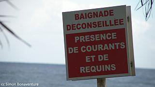 Une adolescente de 15 ans tuée par un requin à la Réunion