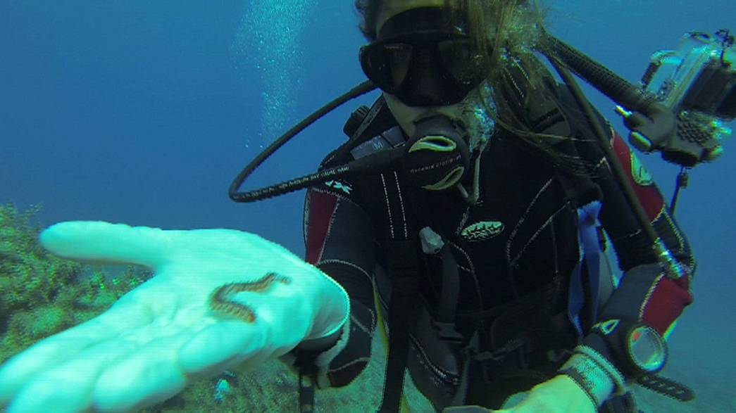 De nouvelles espèces marines aux rayons X