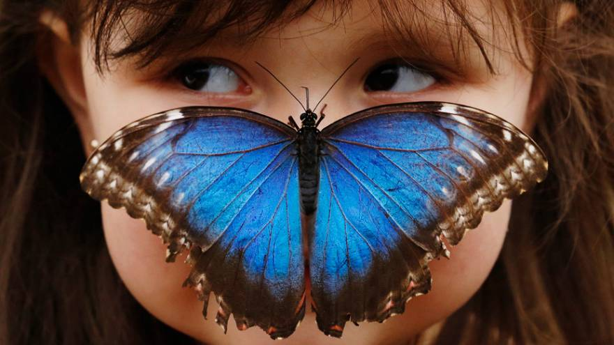 Butterflies could disappear from Europe