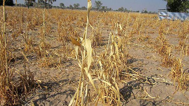 Aszály és éhínség Namíbiában