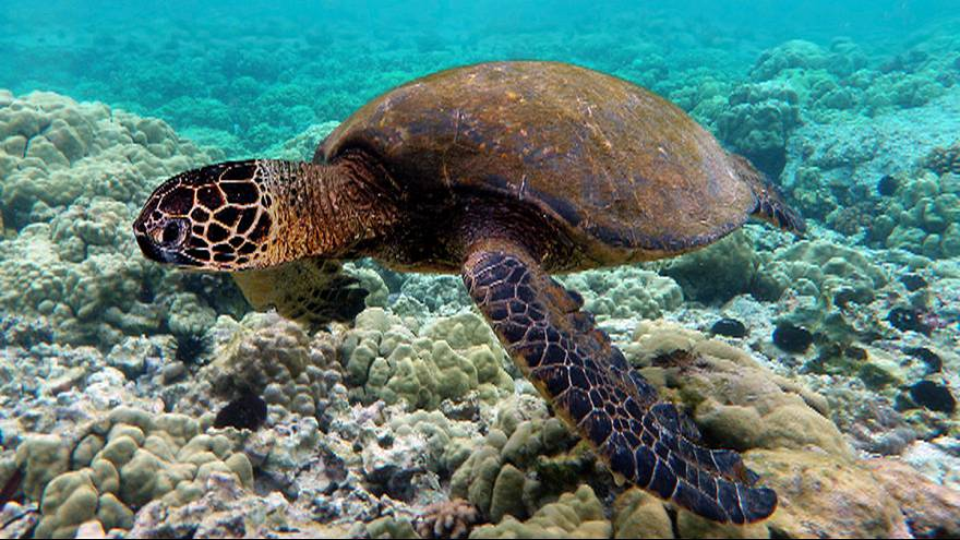 Ingestion of plastic at record high for sea turtles
