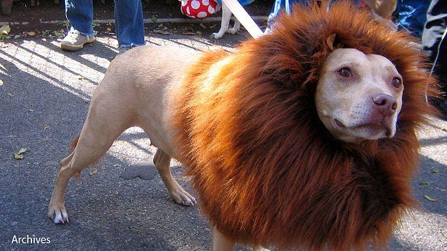 Felugatott az oroszlán a kínai állatkertben