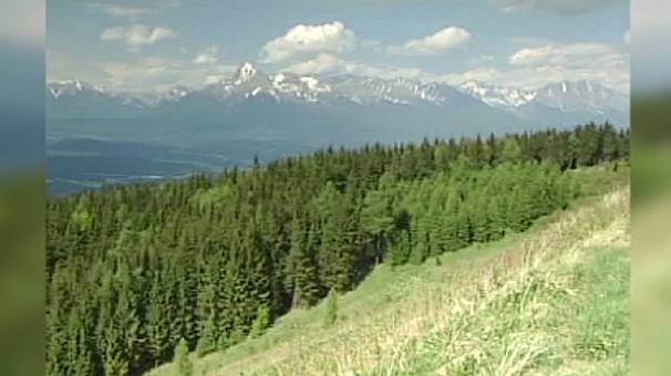 European forests near carbon saturation point