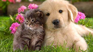 Έσωσαν γάτα κάνοντας μετάγγιση αίματος από...σκύλο!