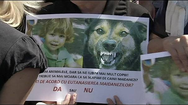 Protest in Bucharest over killing of four-year-old by stray dogs