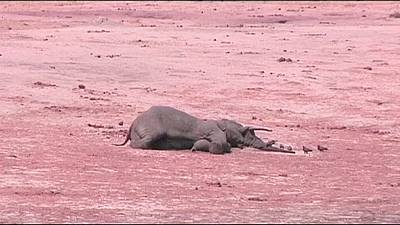 Over 80 elephants killed by poachers in Zimbabwe