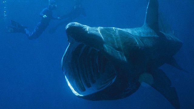 Titokzatos cápainvázió Anglia vizein