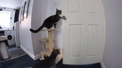 Half a million watch footage of dog and cat conspiring to escape kitchen