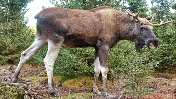 Not amoosed - man shot sitting on the toilet by deerhunter in Norway