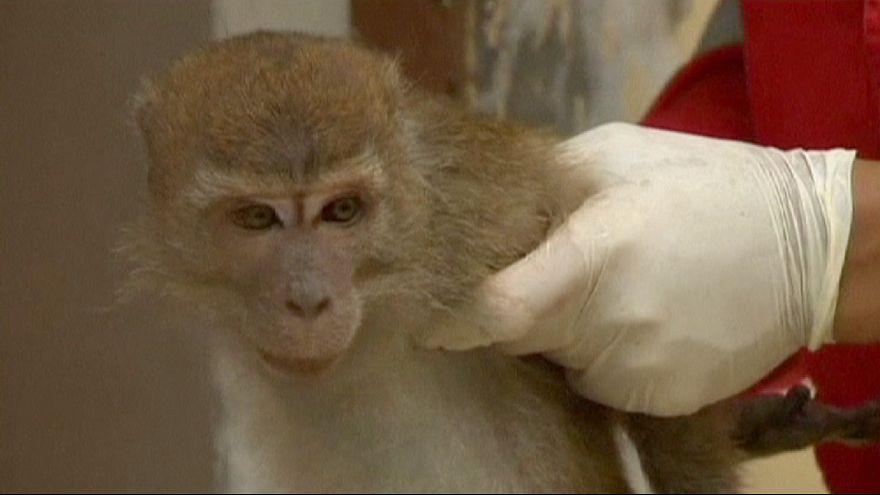 Jakarta veut se débarrasser des montreurs de singes