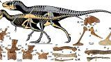 Ανακάλυψαν νέο αιμοβόρο Τυραννόσαυρο!