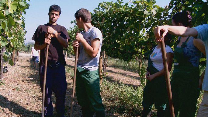 Ekonomik kriz tarımı ve tarıma yatırımı yeniden hatırlattı