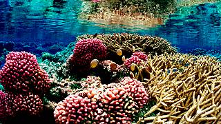 Une exposition d'art sous-marine ? Un Australien l'a fait !