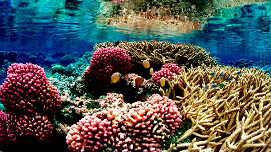 Une exposition d'art sous-marine ? Un Australien l'a fait!