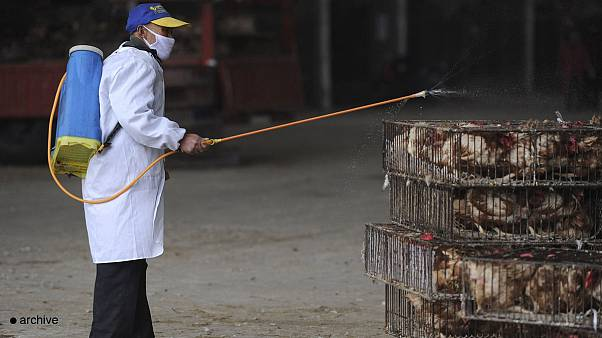 Un premier décès dû à la grippe A(H7N9) à Hong Kong