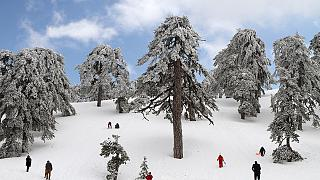 Στα λευκά «ντύθηκε» η Κύπρος – Κρύο και παγωνιά