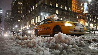 Νέα Υόρκη: Εντόπισαν ιαπωνική κατσαρίδα που αντέχει στο κρύο