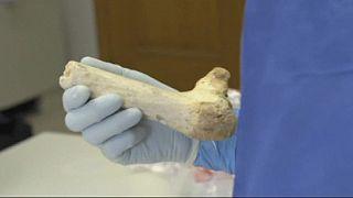 Forscher analysieren älteste frühmenschliche DNA