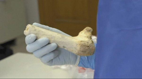 Обнаружена ДНК предка неандертальца
