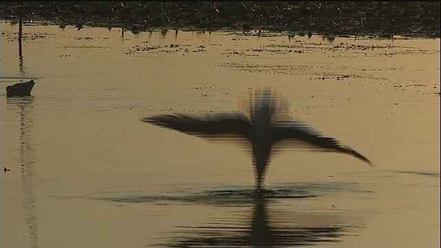 خبراء البيئة يحذرون من الصيد الجائر الذي يهدد الحيوانات في دلتا الدانوب
