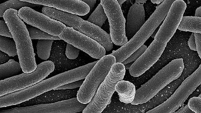 Une bactérie inconnue en cause dans les décès de trois nouveaux-nés en France