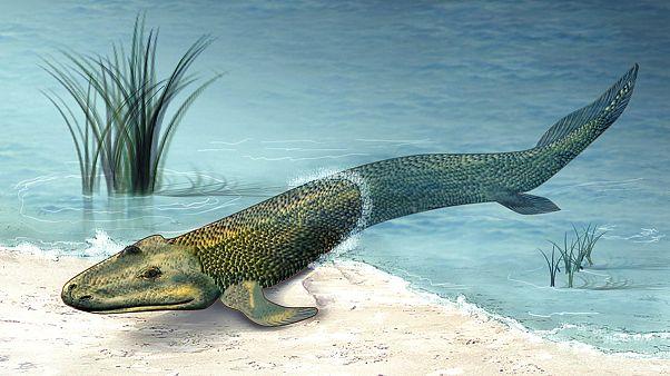 Τικτααλίκ: Το ψάρι που έγινε...τετράποδο ζώο;