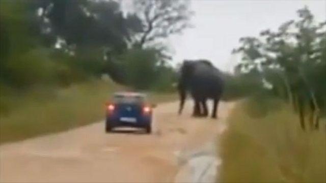 Afrique du Sud : un éléphant attaque une voiture et blesse une jeune britannique