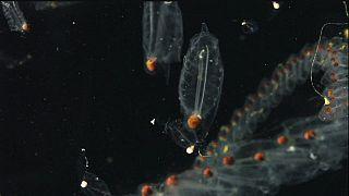 Nueva lista de las especies del plancton marino