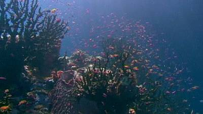 Great Barrier Reef 'at risk' from coal development plan
