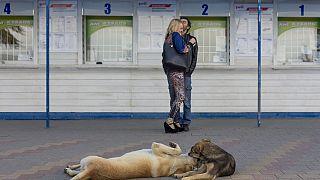 Απαράδεκτη επιχείρηση εξόντωσης αδέσποτων στο Σότσι
